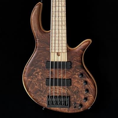 Elrick Gold Series 5-String Bass - Swamp Ash, Walnut, Birdseye Maple for sale
