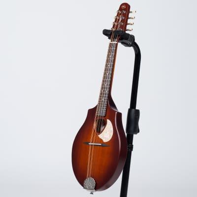 Seagull S8 Mandolin - Burnt Umber for sale