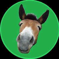Record Mule
