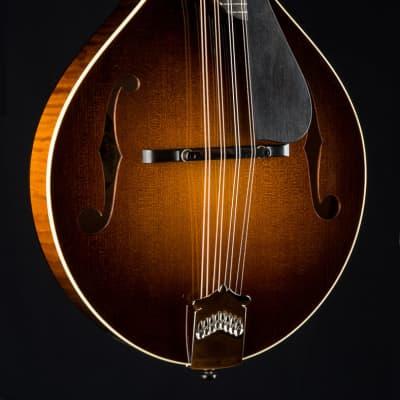 Collings MT Gloss Top Sunburst Mandolin With Ivoroid Bindings and Pickguard NEW Gloss Sunburst