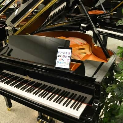 Schiller Baby Grand Piano w/ iQ PAD Player System - Black Polish