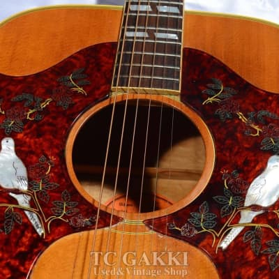 Gibson 1968 Dove Double Pickguard for sale