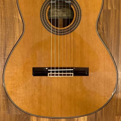 New World Player 650 EL 2019 for sale