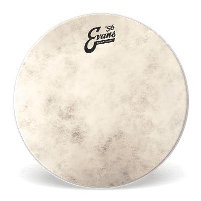 """Evans TT18C7 Calftone Tom Drum Head - 18"""""""