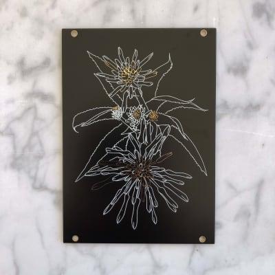 Materia - Aloe 18HP