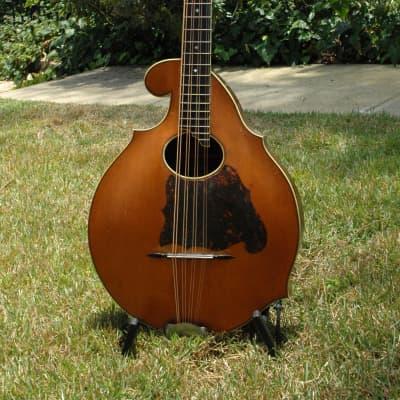 circa 1913 Bruno Style D Cello Mandolin (Mandocello) - VIDEO for sale