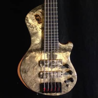 Five String Bass 2009 buckeye burl/honduran mahogany Rivera@Healdsburg Guitars for sale