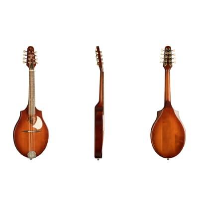 Seagull S8 Acoustic Mandolin Burnt Umber Solid Spruce Top Custom Polished Finish Burnt Umber for sale