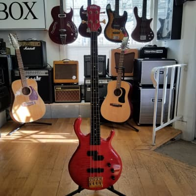 Pedulla Signature Series Buzz Fretless Bass 1992 for sale