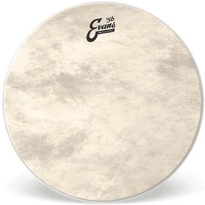 """Evans BD20GB4CT EQ4 Calftone Bass Drum Head - 20"""""""