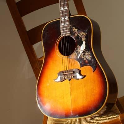 Gibson Dove 1965 Sunburst for sale